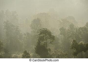 névoa, floresta, manhã