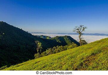 névoa, manhã, floresta tropical