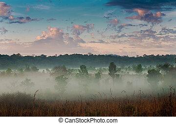 névoa, manhã, sky.