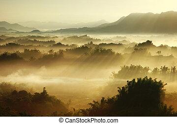 névoa, manhã, sol