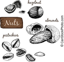 Nötter, sätta, illustrationer