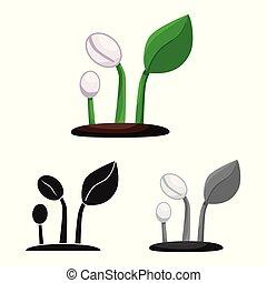 növényi, kávécserje, gyűjtés, részvény, hajtás, vektor, web., ábra, icon., jelkép
