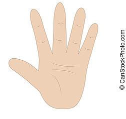 número, mostrando, mão, cinco