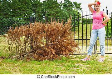 nő, eltávolít, aszalt, thuja, fa, alapján, udvar