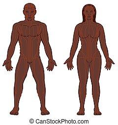 nő, ember, test, meridians, párosít, fekete