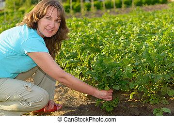 nő, kertészkedés