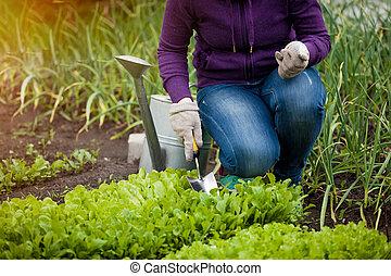 nő, kert saláta, fénykép, ágy, dolgozó, ár