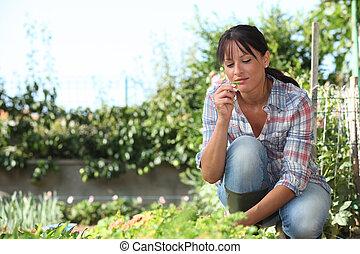 nő, kert