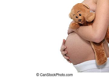 nő, terhes, birtok, hord, teddy-mackó