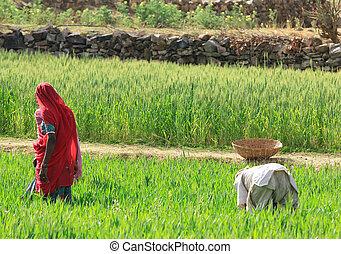 nők, gazdálkodás