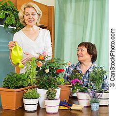 nők, két, öregedő, virágcserepek