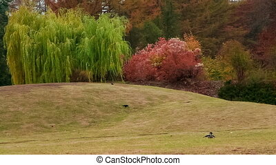 N. Grishko National Botanical Garden - Autumn in the...