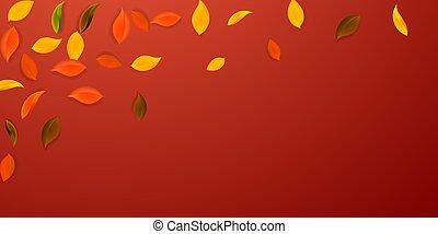 n, vert, tomber, rouges, jaune, automne, leaves., brun