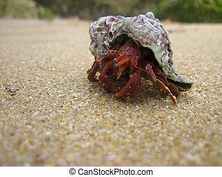 na, caranguejo, areia, andar