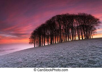 na, drewna, ognisty, wschód słońca