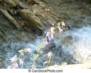 nach, překrásný, hlubina, květiny, hora., campanula, alpina.