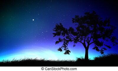 nacht himmel, und, baum, schleife