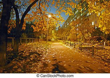 nacht, und, autumn.