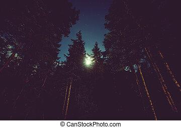 nacht, wald