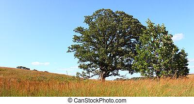 Nachusa Grasslands - Illinois