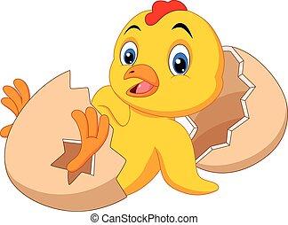 nacido, nuevo, caricatura, polluelo