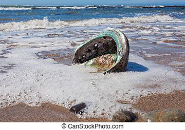 nacre, cáscara, en, lavado, oreja marina, en tierra, playa, brillante