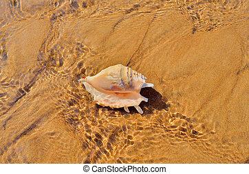 Nacre - Cockle-shell on the sea sand bottom