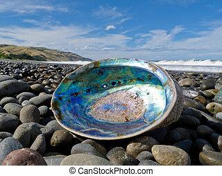 nacre, lavado, oreja marina, en tierra, paua, cáscara, brillante