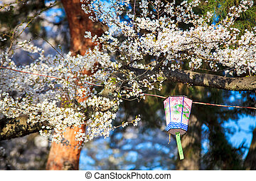 Nagahama Castle in sakura season