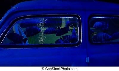 nager, accident, underwater., noyé, voiture, fish, océan, mer, auto, fracas