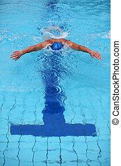 nageur, natation, dauphin