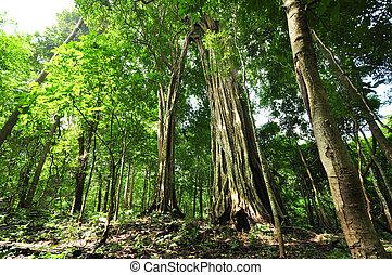 nagy fa, alatt, egy, zöld erdő