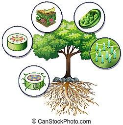 nagy fa, cellák, berendezés, zöld, becsuk
