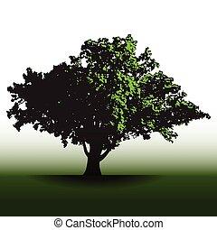 nagy fa, tölgy, öreg, dicső