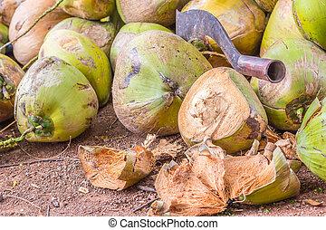 nagy, kókuszdió, zöld, kés, érett