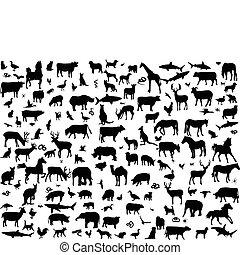 nagy, különböző, állatok, gyűjtés