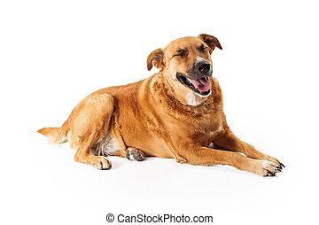 nagy, kutya, nevető