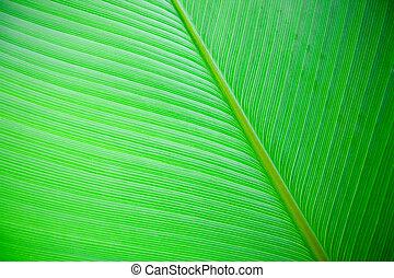 nagy, levél növényen, háttér