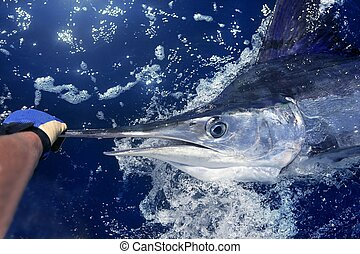 nagy, marlin, játék, atlanti-, halászat, fehér, sport