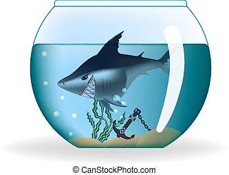nagy, veszélyes, látszó, cápa, alatt, egy, kicsi, akvárium
