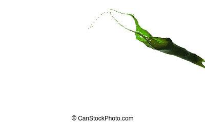 nahaufnahme, oel, flüssiglkeit, farbe, splashing., grün, ansicht