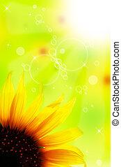 nahaufnahme, von, sonnenblume, aus, sonnenuntergangshimmel