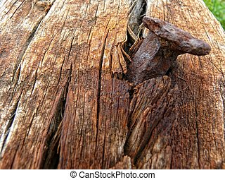 Nail and rotten wood - Macro view of rusty nail in rotten...