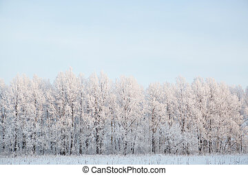 Naked birch tree branches covered by snow and frost against the blue sky with white light clouds