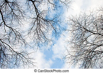 Naked branches against blue sky