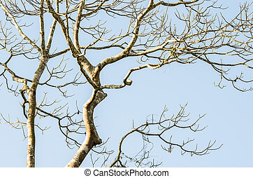 Naked branches of a tree against blue sky close up