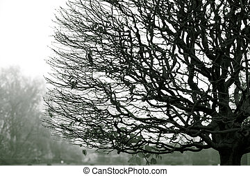 Naked branches of a tree against sky in fog