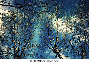 Naked branches of a tree against the dark blue sky close up