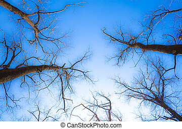 Naked branches of trees