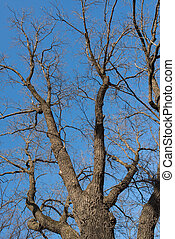 naked tree branches against the blue sky. Look up